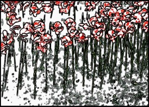 Poppies-In-The-Snow-57